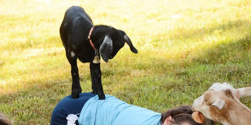 Chapel Hill Carriage House  Goat Yoga