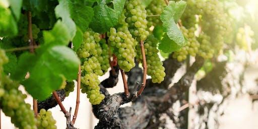 Charlie Palmer + Arista Winery