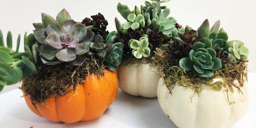Workshop: Succulent Pumpkins