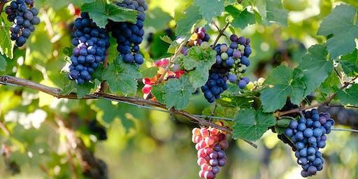 Pinot Noir Wine Tasting Class