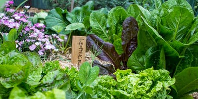 Organic Food Growing for Starters