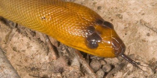 Snakes Alive! Korumburra