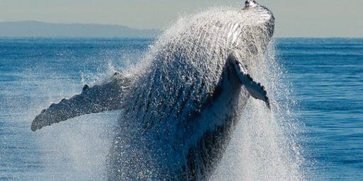 Whale Photography Workshop with Michael Snedic