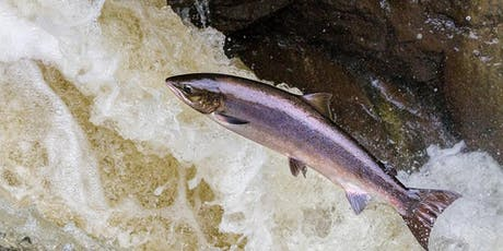 See the Salmon Run tickets