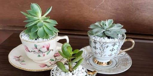 Vintage Teacups and Succulents - Make and Take