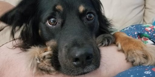 The Holistic Pet - Anxiety Relief