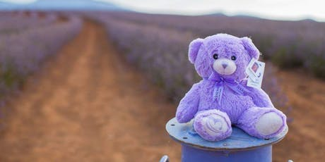 The Lavender Bear from Bridestowe Lavender Estate Australian brands succeeding in China - Case Study Series tickets