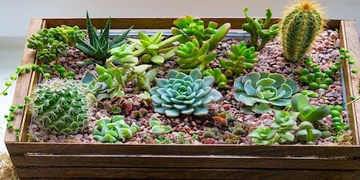 Plant-tastic Succulents