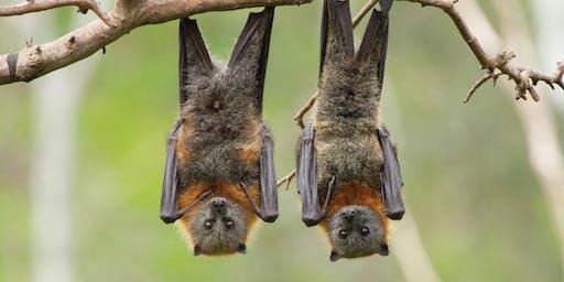 Bat Camp!