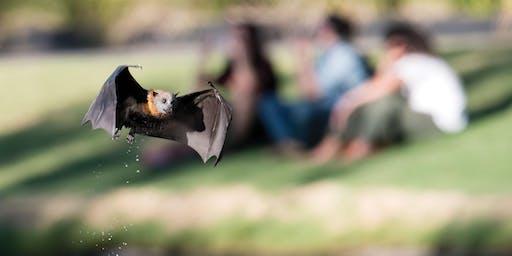 Bat Ramble (for educators only)