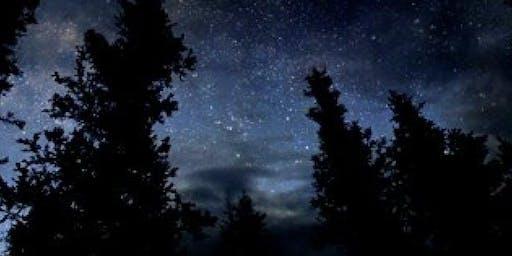 Woodland Wanders - After Dark