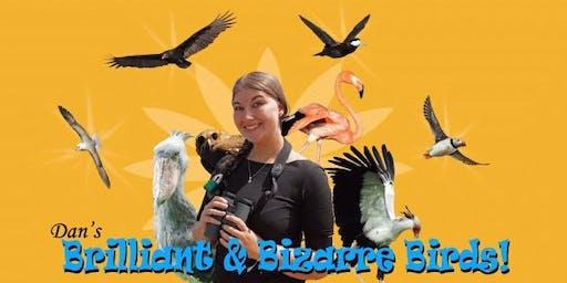 Dan's Brilliant & Bizarre Birds / Adar Gwych a Rhyfeddol Dan