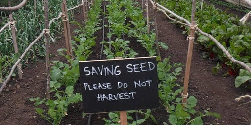 Seed Saving for Productivity and Profit