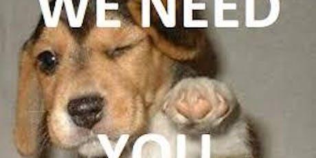 Puppy Training 8 Week Course - Harrietsham tickets