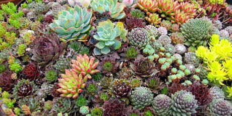 The Basics of  Succulents, Cacti, and Xeriscaping tickets