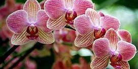 Basics of Growing Orchids