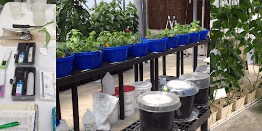 Hydroponic Vegetable Nutrient Management