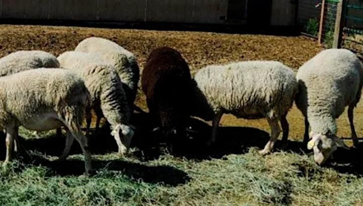 Tour KJ'n Ranch & Sheep Mountain Creamery with AERO image