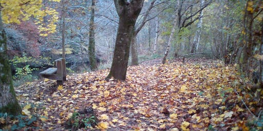 Wander for Well-being - Autumn Amble