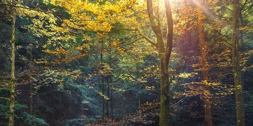 Forest Friday Hikes with Inner Alchemy & The Intuitive Prospector