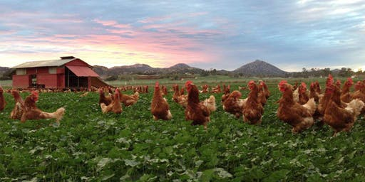 Happy Hens Farm Tour, Ramona CA