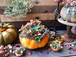 Succulent Pumpkin Centerpiece Workshop