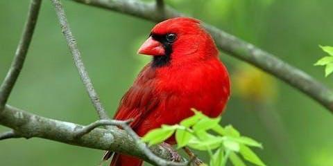 Backyard Birds: Discover the Birds in your Backyard - FREE!