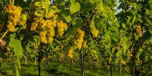 Germany and Austria: More Than Riesling