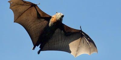 Bat House Making