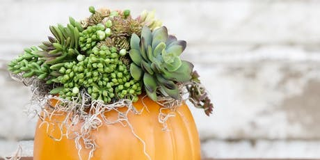 Faux Succulent Pumpkin Workshop tickets