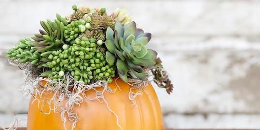 Faux Succulent Pumpkin Workshop