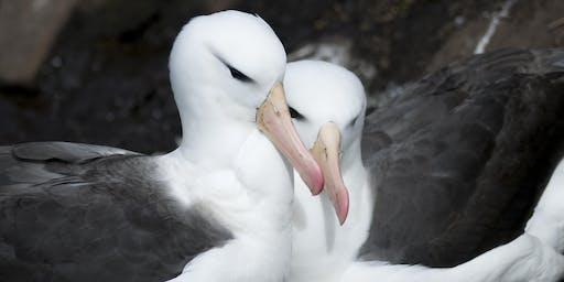 """Albatross"" film screening"