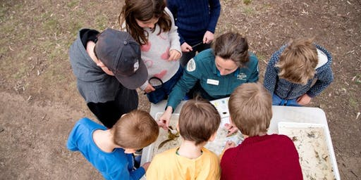 Junior Rangers Minibeast Discovery - National Water Sports Centre