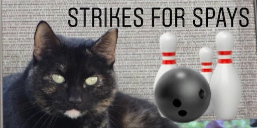 Strikes for Spays with MEOW Now