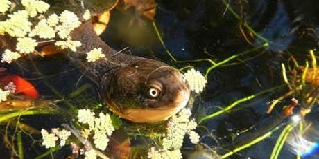 Lane Cove Bush Kids - Turtles, Tadpoles & Tots tickets
