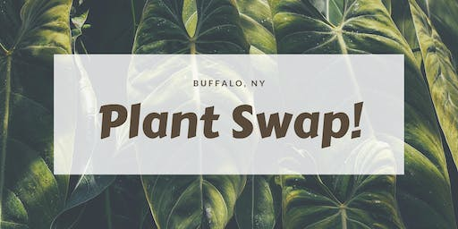 Buffalo Houseplant Swap & Meetup