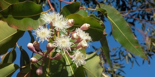 Eucalyptus ID Workshop