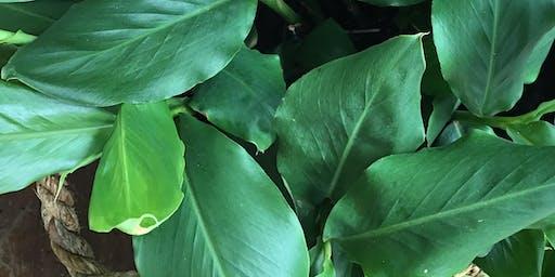 Indoor Plant Care - Spring Workshop