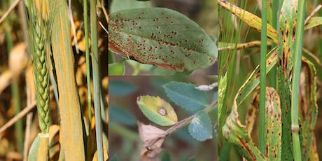 Crop Pathology Field Day in Horsham - Tuesday 8  October 9am to 1pm tickets
