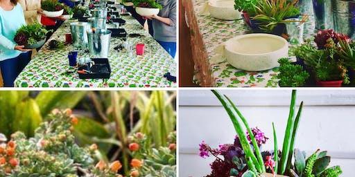 Spring in the Hills Large Succulent Bowl Workshop