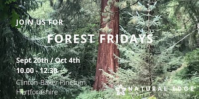 Forest Fridays