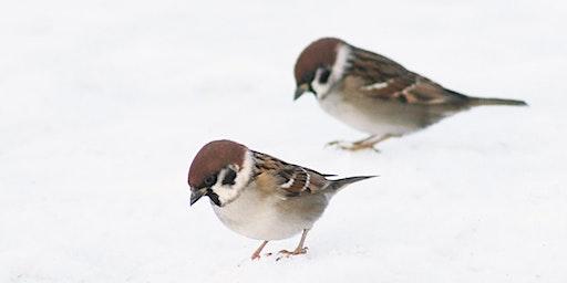 Winter Bird Identification Walk