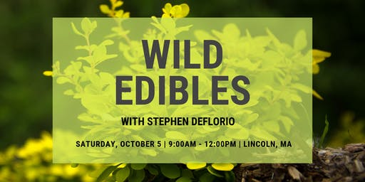 Wild Edibles at Farrington Nature Linc