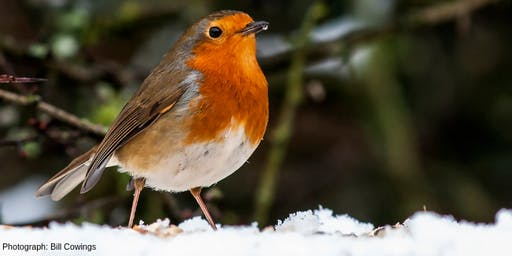 Winter Robins Birdwalk