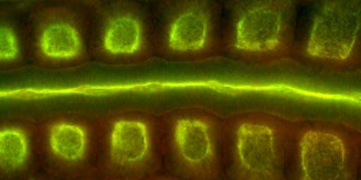 2019 Cell Dynamics Symposium