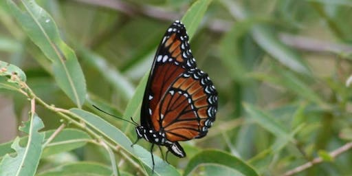 Bugs and Butterflies of Brooker Creek Preserve