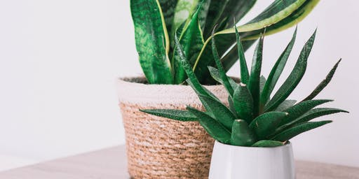 Why do I need a houseplant?