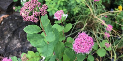 Native Hedgerows for the Willamette Valley