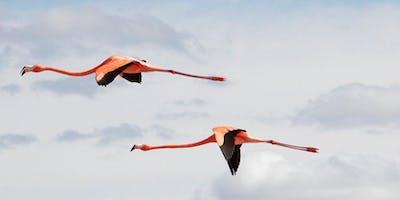 YUCATAN BIRDING JOURNEY