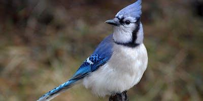 Fall Nature Series: Bird Walk
